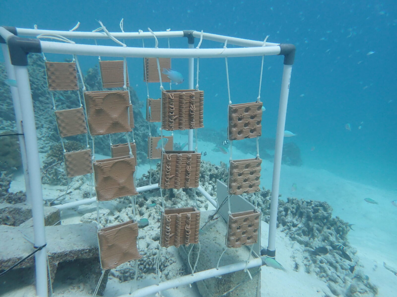 Frame with prototypes underwater, © L. Tazi.